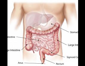 abdomen-1698565_1920