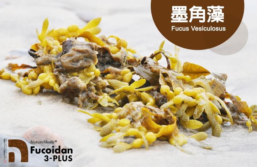Fucus Seaweed-01
