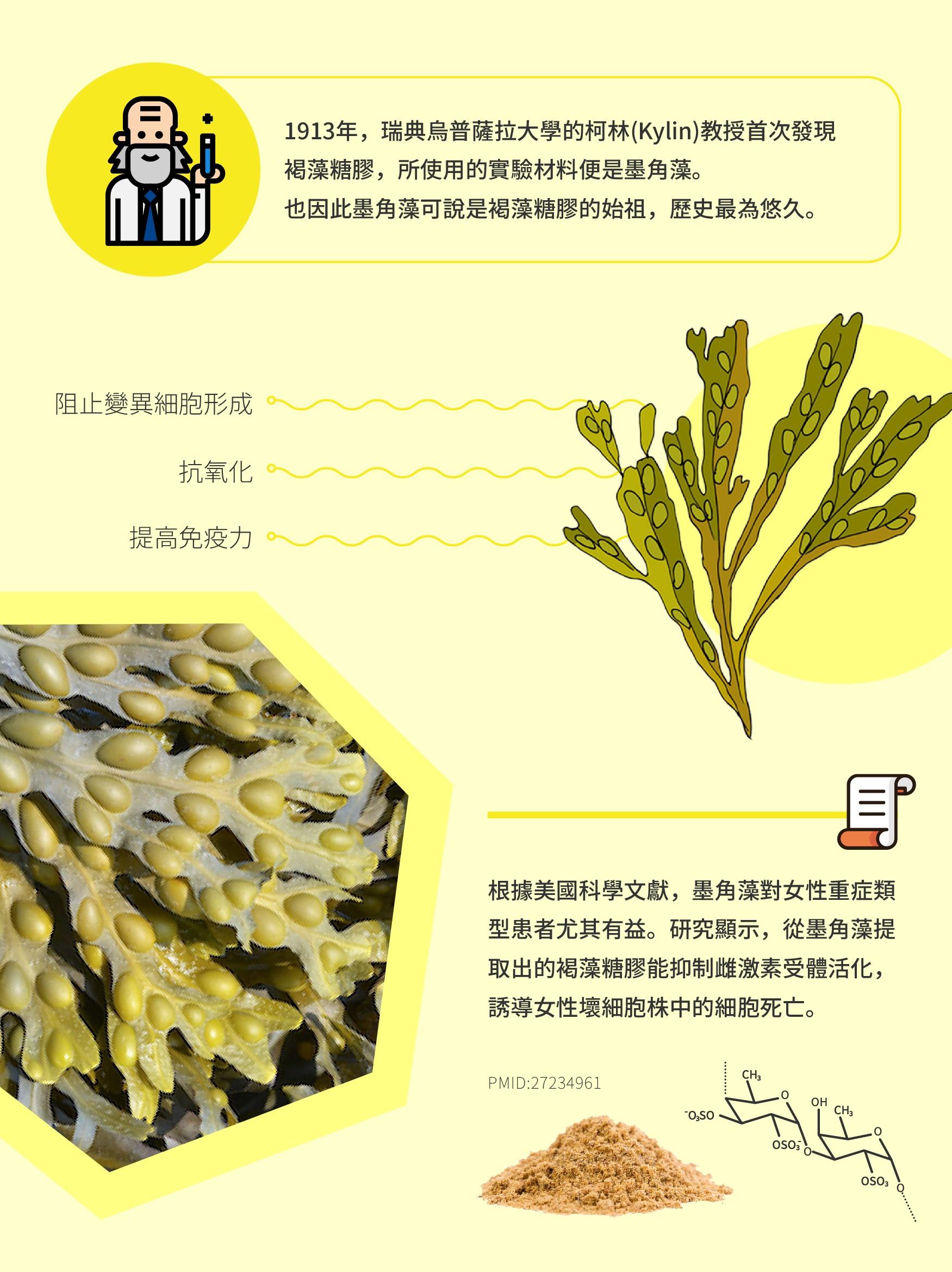 墨角藻介紹(長圖)