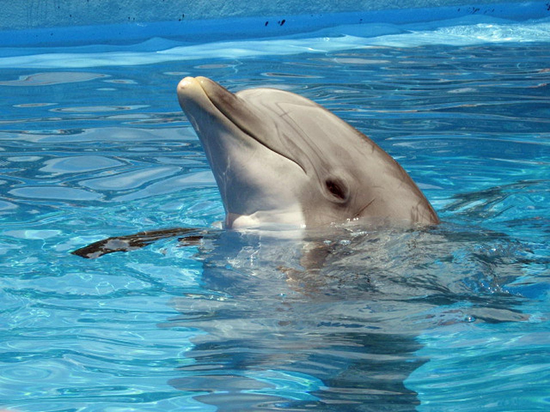 dolphin-597527_1920