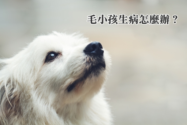 Pet-01.jpg