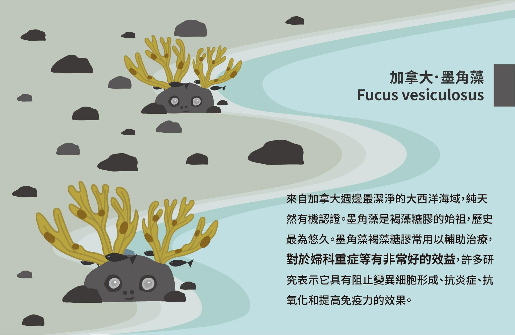 藻精靈-03